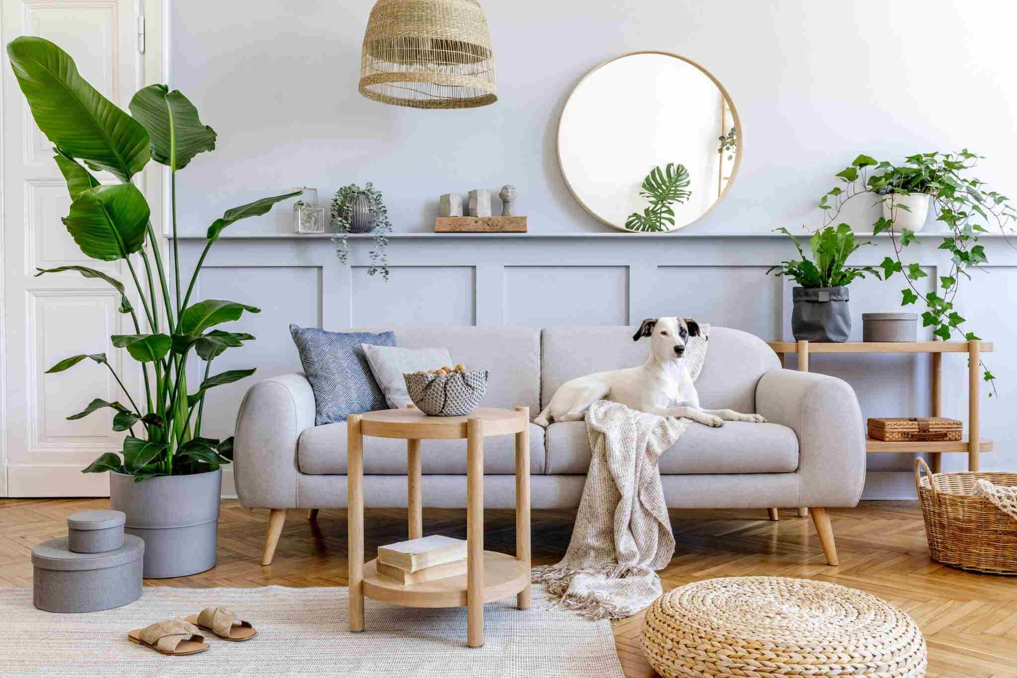 Feng Shui Living Room Tip 4: Use Flowers and Plants