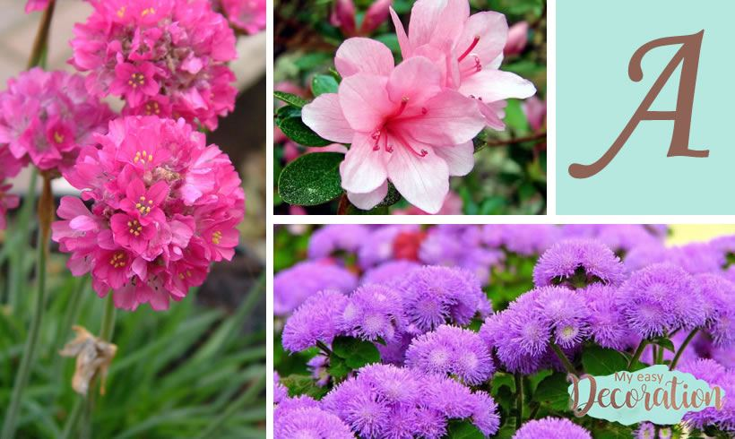 Flowers Names Starting With A