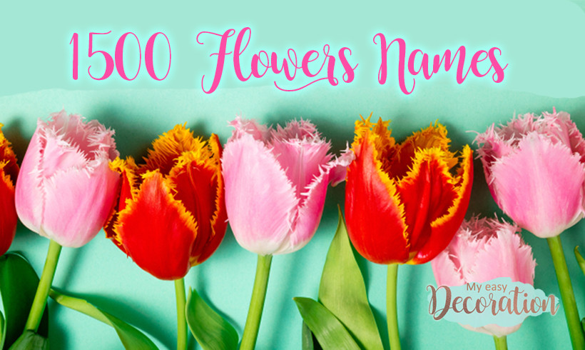 1500 Flowers Names A to Z With Pictures ❤️