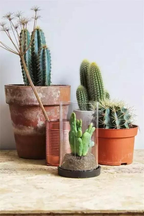Cactus and Feng Shui