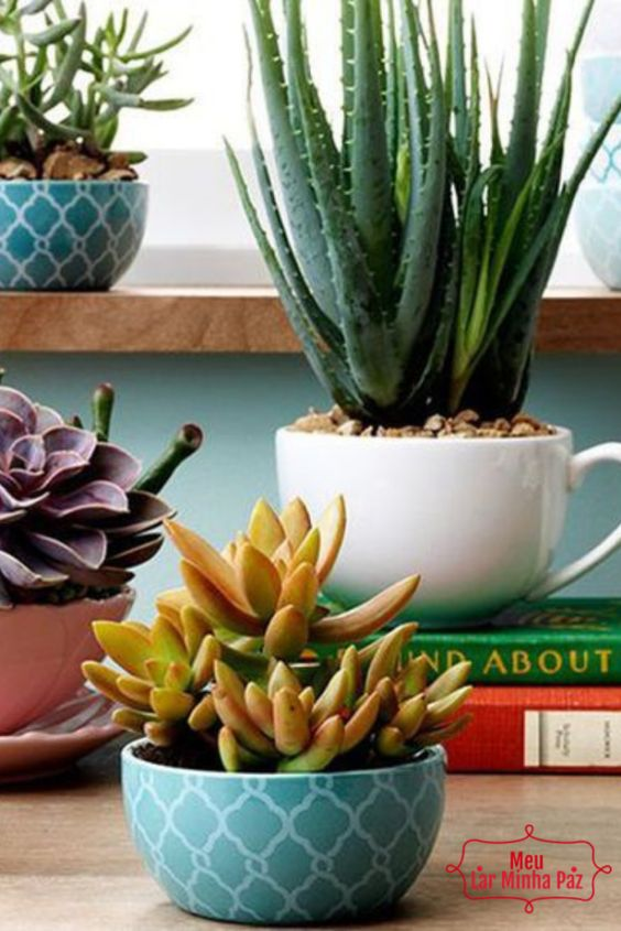 Types of Vases to Decorate with Cactus