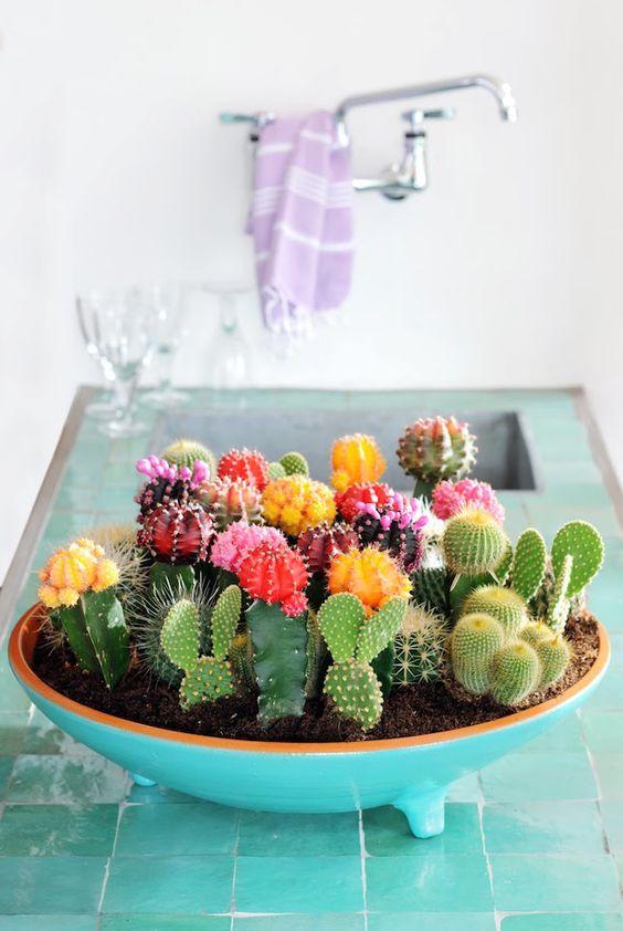 Cactus in a mini garden: positive spirit