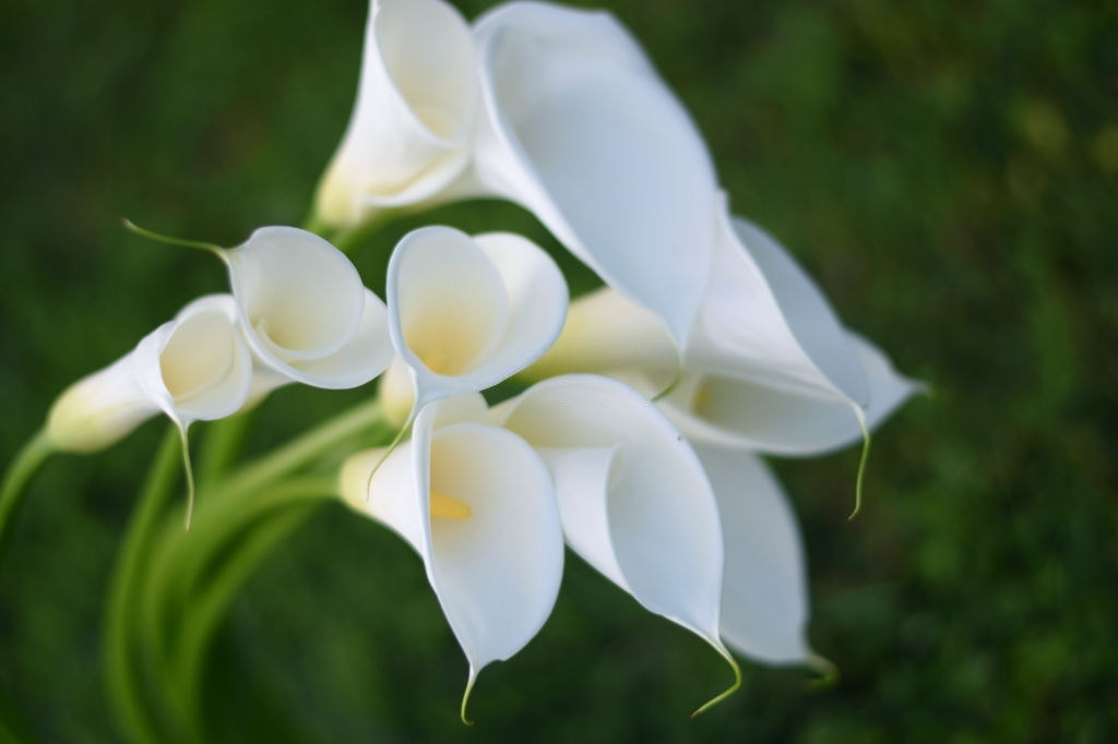 Flower For Funeral With Calla Lily