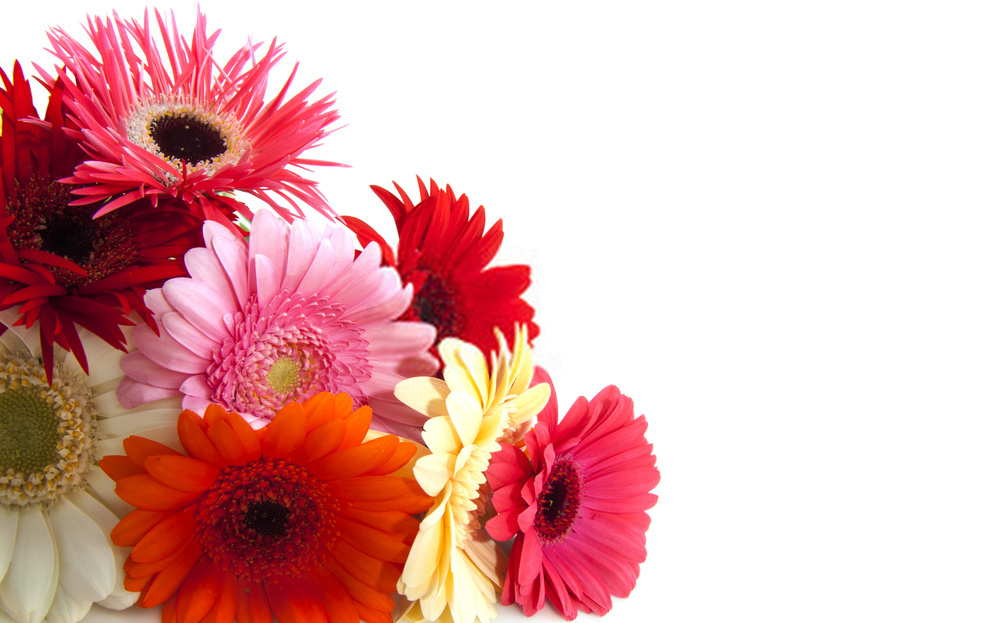 Flower For Funeral With Gerbera Daisy