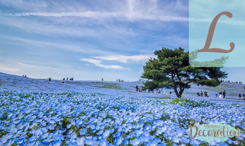 Blue Flowers Starting With L