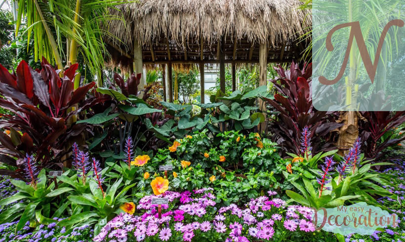 Hawaiian Flowers Starting With N