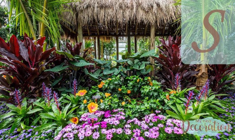 Hawaiian Flowers Starting With S