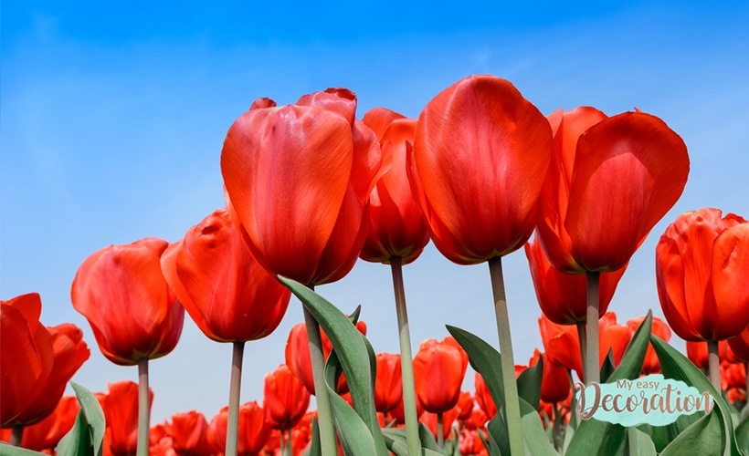 Pictures of Red Flowers: Inspirations to Use in Room Decoration