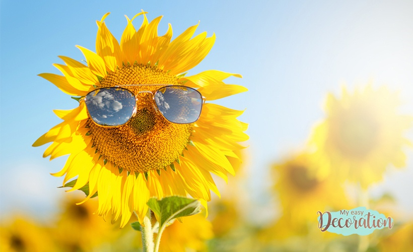 The Beauty of Sunflower in the Decoration Decoration of the Interior Environments
