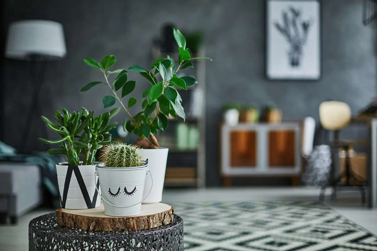 The Delights And Benefits Of Having House Plants