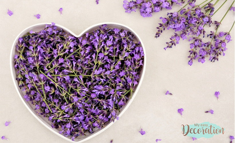Lavender And Love