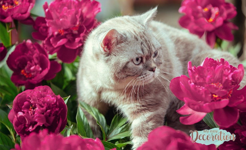 Are Peony Poisonous To Cats?