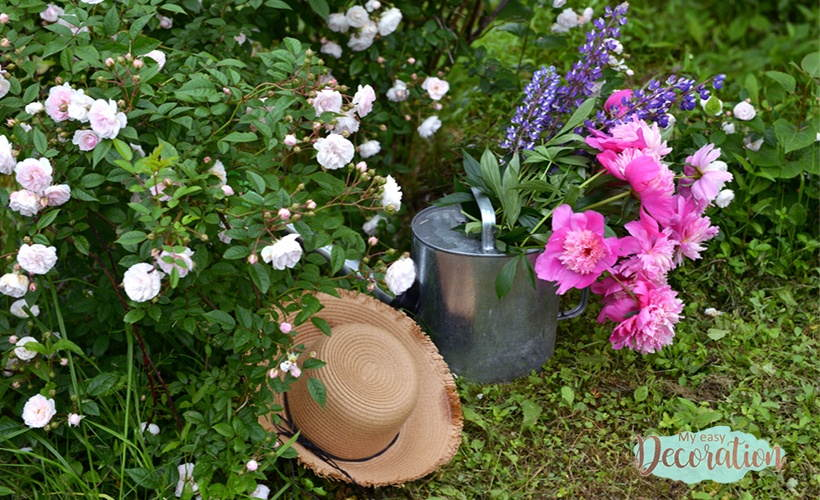 Can Peony Grow In Pots?