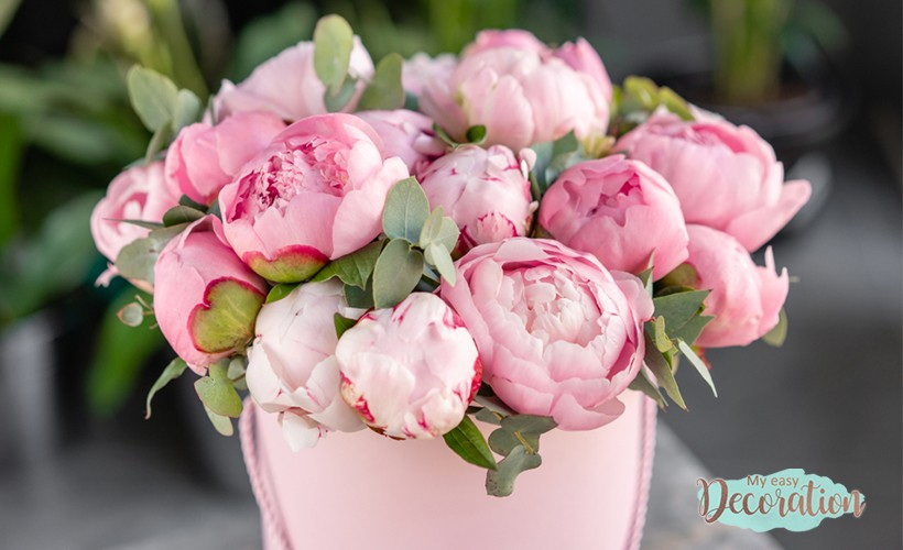 Peony Meaning Flower Pink