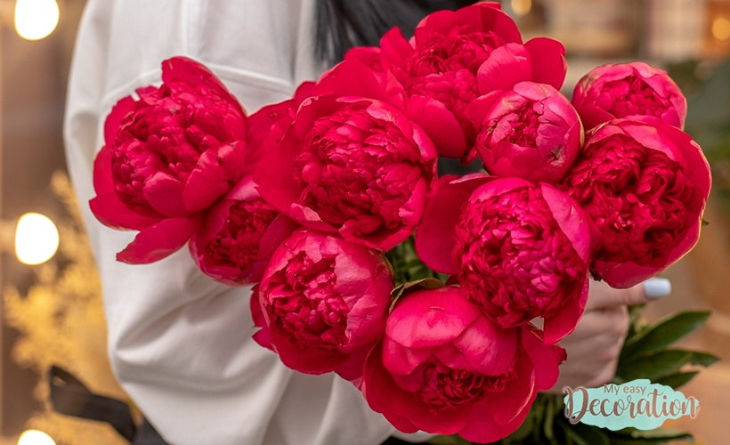 Peony Meaning Flower Red