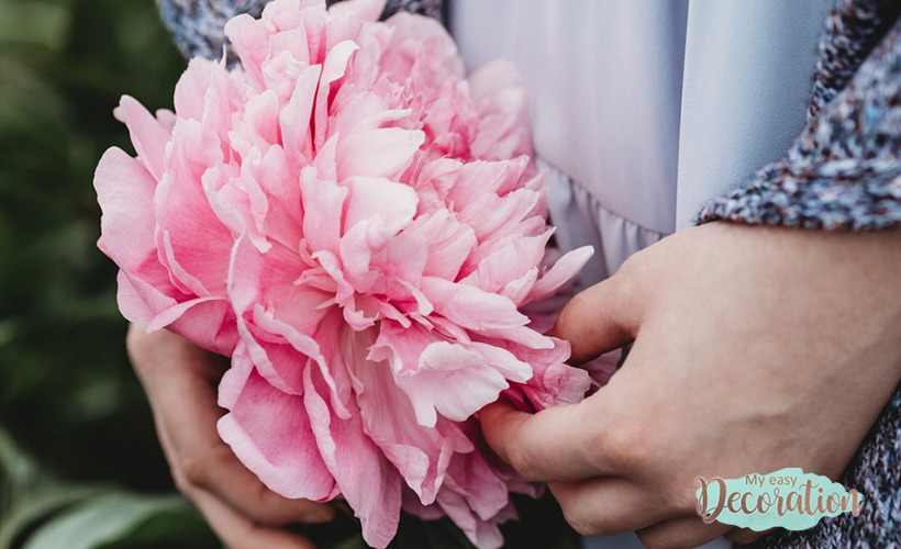 The Secrets Of The Peony Meaning