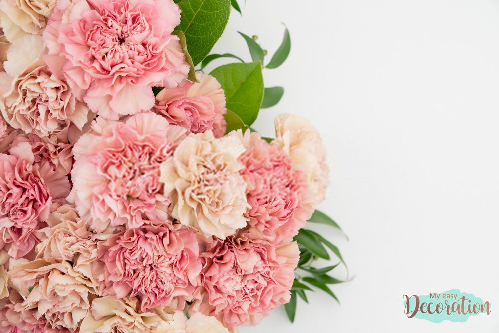 pictures-of-flowers-carnation