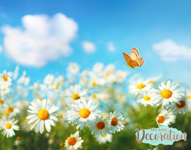 pictures-of-flowers-daisy