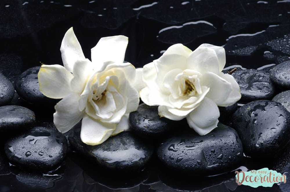 pictures-of-flowers-gardenia