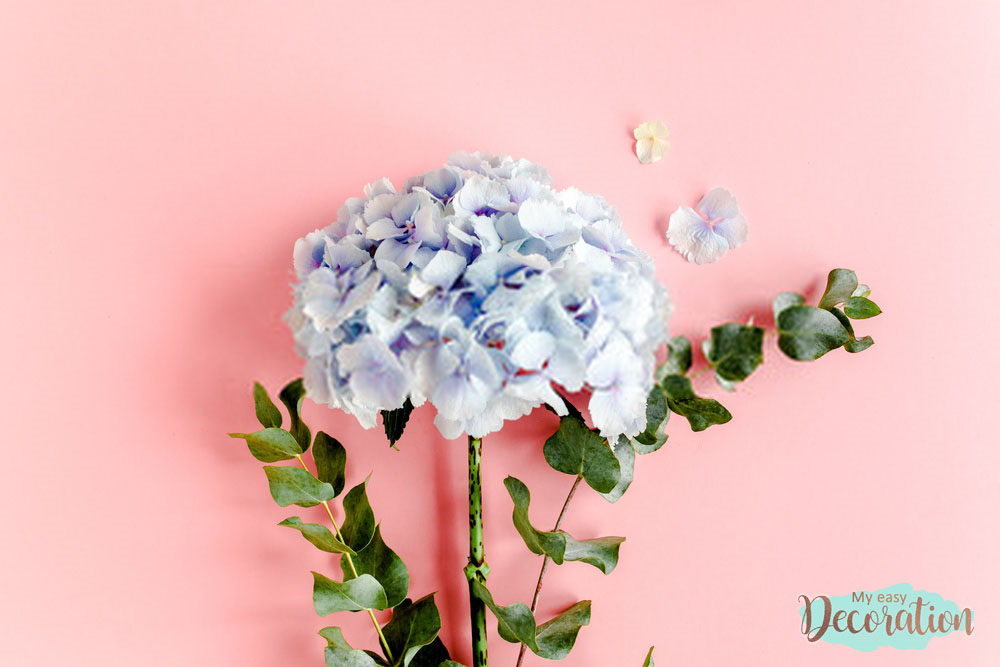 pictures-of-flowers-hydrangea