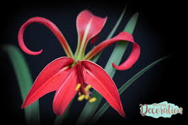 pictures-of-flowers-lily-garden