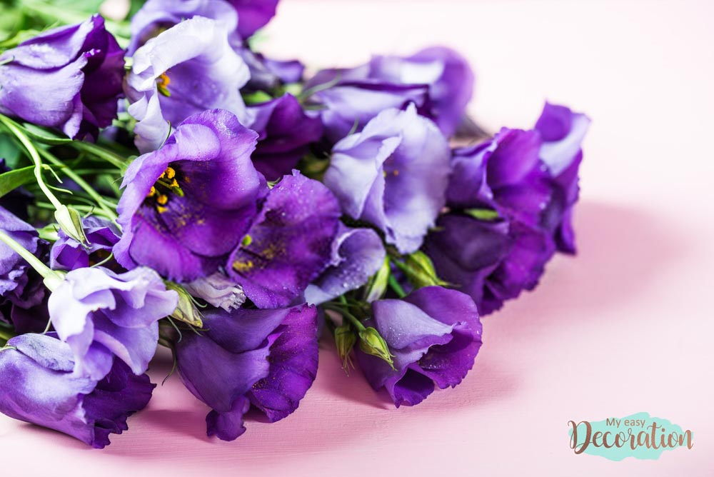 pictures-of-flowers-lisianthus