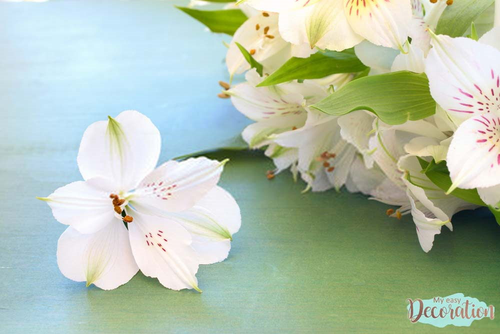 pictures-of-flowers-peruvian-lily