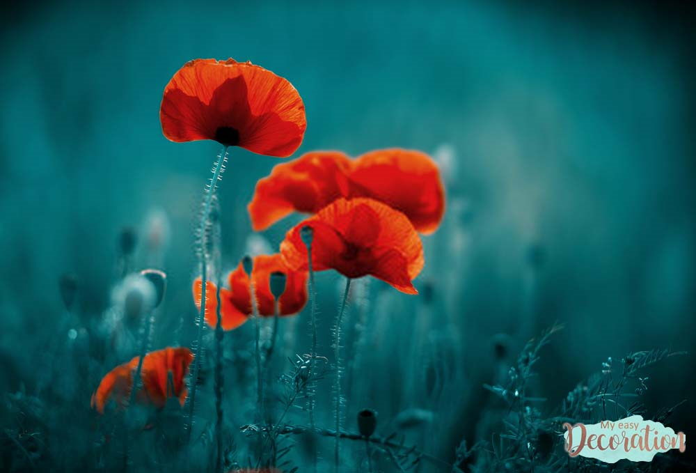 pictures-of-flowers-poppy