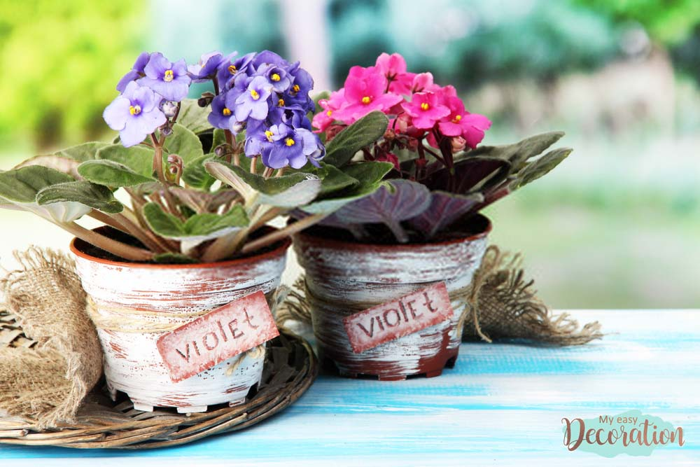 pictures-of-flowers-violet