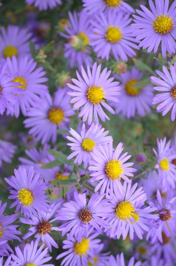 purple-flowers-energy