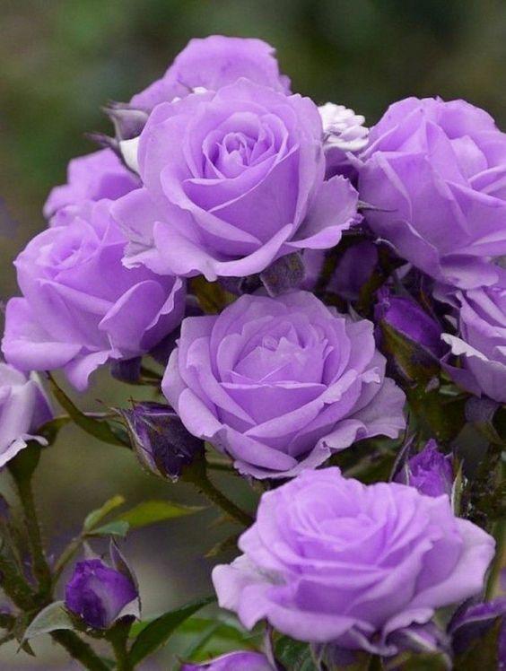 purple-flowers-power