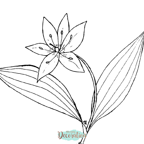 Drawings of Queen's Cup Flowers