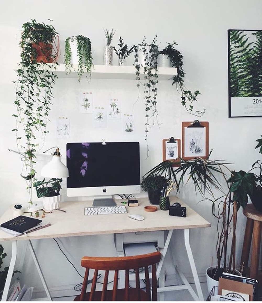 Plants For Home Office Decoration