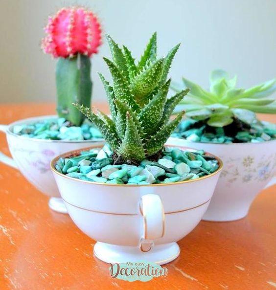 succulents-vase-cup