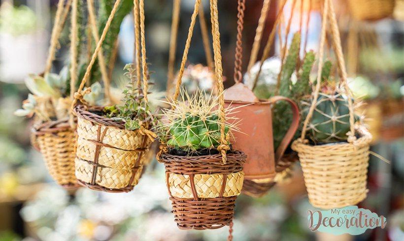 hanging-garden-succulents