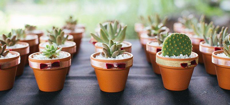 succulents-clay-pots