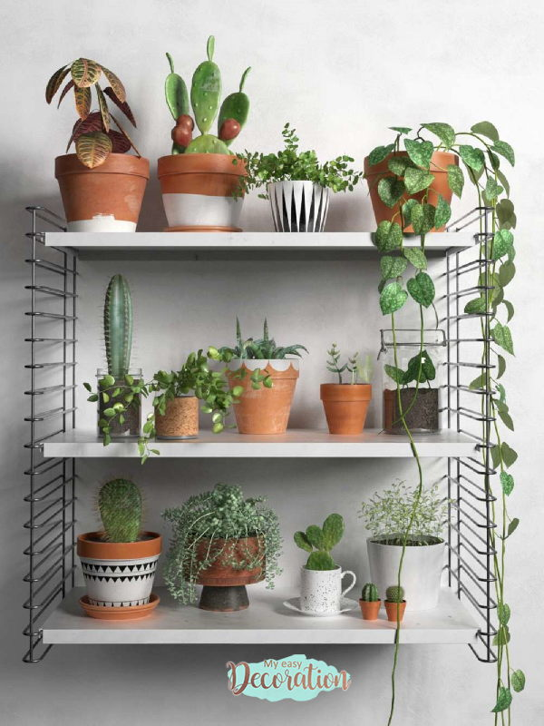 Green Walls In Kitchen With The Beauty Of Succulents