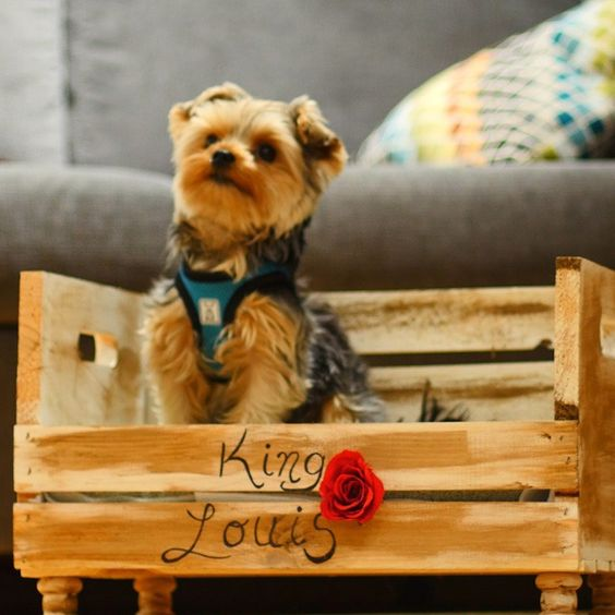 Bed For Your Pet Made Of Wooden Crates