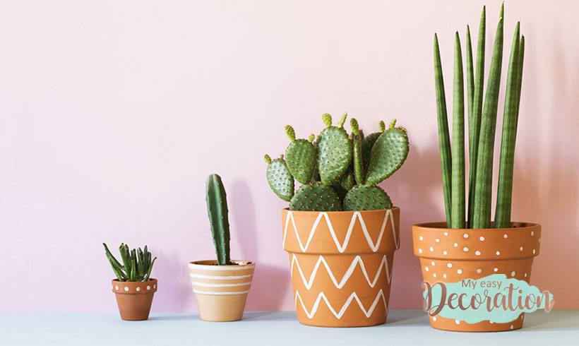 Why Do People Think Succulents are a Good Idea? 🌵